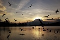 Picture birds, lake, mountains, sunset, silhouettes, seagulls