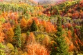 Picture slope, mountains, hills, trees, autumn, forest