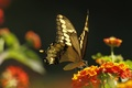 Picture macro, moth, plant, butterfly, insect, flower