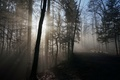 Picture morning, light, forest