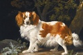 Picture painting, George Stubbs, Spaniel