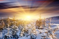Picture tree, dawn, snow, mountains, the sun