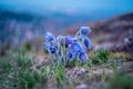 Picture bokeh, macro, Cross, spring, nature