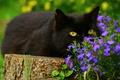 Picture cat, eyes, flowerbed, black, greens, tree, face, stump, garden, yellow eyes, lies, cat, look, flowers, ...
