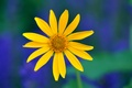 Picture macro, green, Yellow, petals, background, blue, flower