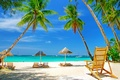 Picture sea, palm trees, stay, umbrellas, beach, sand