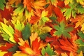 Picture Kaleidoscope, autumn, leaves