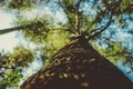 Picture forest, the sky, nature, tree, blur