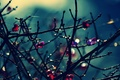 Picture flowers, widescreen, HD wallpapers, Wallpaper, leaves, tree, full screen, background, branches, fullscreen, macro, widescreen, flowers, ...