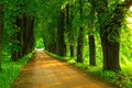 Picture park, spring, Park, forest, nature, road, trees, path, trees, walk, spring, road, nature, forest