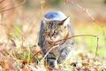 Picture cat, Tomcat, cat