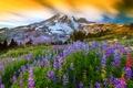 Picture mountain, the volcano, flowers, nature, Washington, top, Lupin, Mount Rainier, grass, Mount Rainier National Park, ...