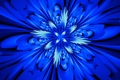 Picture flower, rays, line, petals, symmetry