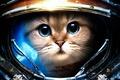 Picture cat, the suit, starcraft