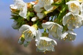 Picture flowers, branch, petals, spring, garden