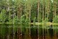 Picture Shchuchye, Komarovo, Saint Petersburg, nature, trees, Russia, lake, photo, forest