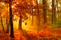 Picture Nature, Trees, Forest