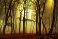 Picture leaves, autumn, trees, fog, Park, sunrise, morning