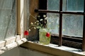Picture flowers, window, Bank