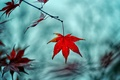 Picture macro, red, background, tree, widescreen, Wallpaper, blur, branch, leaf, wallpaper, leaf, widescreen, background, leaves, macro, ...
