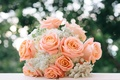 Picture buds, bouquet, roses, wedding bouquet