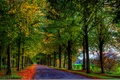 Picture road, leaves, fall, leaves, path, colors, trees, walk, autumn, forest, forest, nature, trees, autumn, colorful, ...