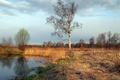 Picture tree, pond, landscape, nature