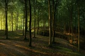 Picture light, forest, nature