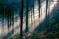 Picture forest, rays, light, trees, nature
