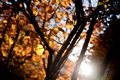 Picture leaves, the sun, macro, rays, trees, orange, branches, yellow, background, tree, widescreen, Wallpaper, blur, branch, ...