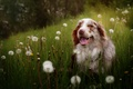 Picture look, each, dog, dandelions