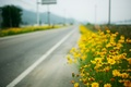 Picture macro, roadside, yellow flowers, road