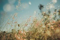 Picture grass, field, bokeh, countryside, sunny, stalks