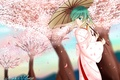 Picture girl, trees, umbrella, petals, Sakura, art, kimono, vocaloid, hatsune miku, Vocaloid, mikevd