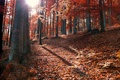 Picture rays, the sun, fallen, autumn, forest, leaves