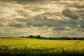 Picture the sky, clouds, flowers, Field, may, may, sky, field, yellow, yellow, clouds