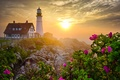 Picture rock, morning, lighthouse, flowers, roses