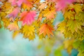 Picture leaves, background, blur, autumn