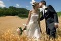 Picture two, wedding, the bride, lovers, pair, field, the groom, kiss