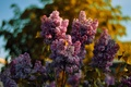 Picture bokeh, butterfly, the sky, Lilac