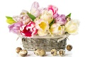Picture eggs, holiday, quail, basket, tulips, Easter