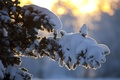Picture winter, the sun, rays, snow, tree, branch