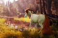Picture forest, nature, river, horse, by ellipsiem