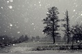Picture winter, trees, photo, black and white, snowfall