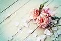 Picture flowers, flowers, petals, petals, roses, roses
