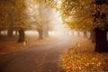 Picture fog, road, autumn