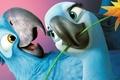 Picture Jewel, Comedy, Rio 2, Darling, Family, Blue Sky, Adventure, Cartoon
