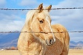 Picture mountains, fence, bokeh, horse