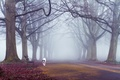 Picture autumn, trees, fog, the way, dog, benches