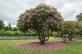 Picture park, spring, Park, flowering, Spring, trees, trees, flowering